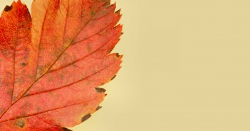 dreamstimefree_269513_autumn_leave